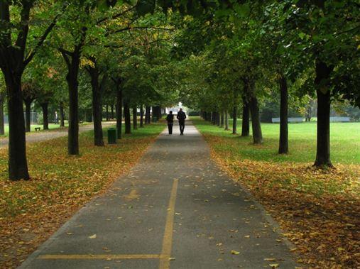 Caminhar em parque pode ter efeito restaurador para o cérebro